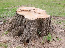 Tree Stump Removal Soham Cambridgeshire